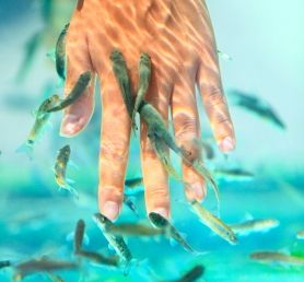 Manicure Fish SPA | Poznań